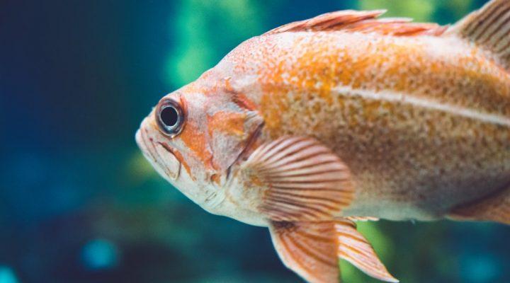 گالری عکس ماهیان زیبا