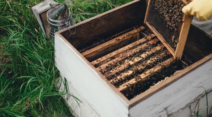 کندو، محل اجتماع زنبورها