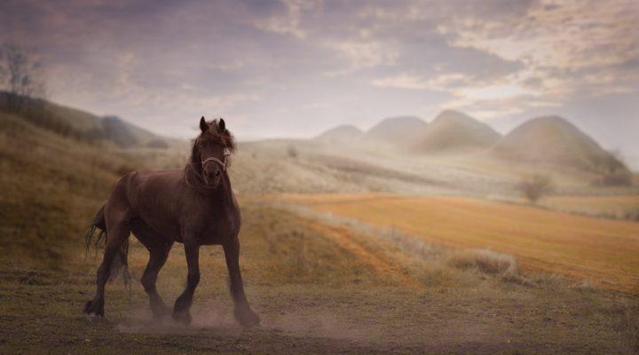 اسب حیوان نجیبی است!