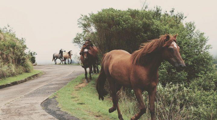داستانی کوتاه و آموزنده در مورد اسب