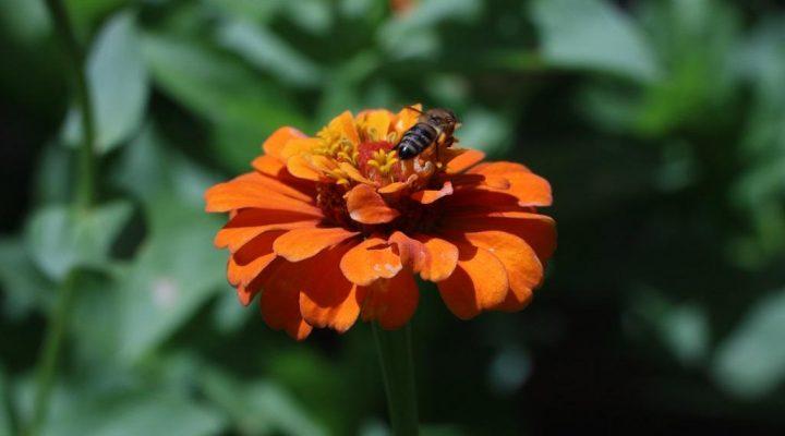 ۳۰ نکته جالب در مورد زنبور عسل!