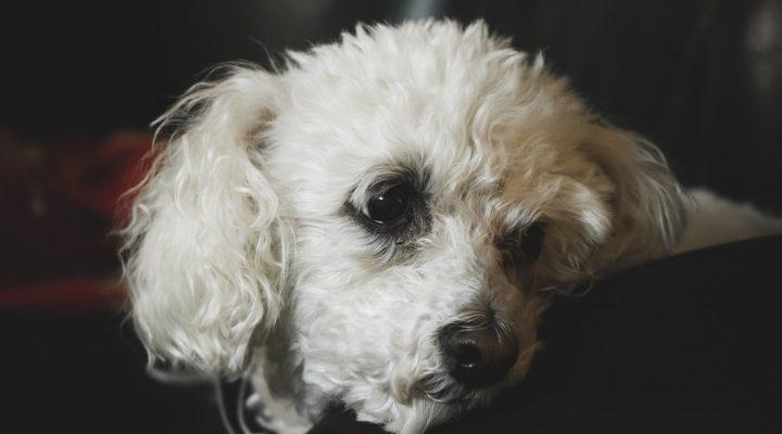 چرا سگ حیوان نجسی است؟