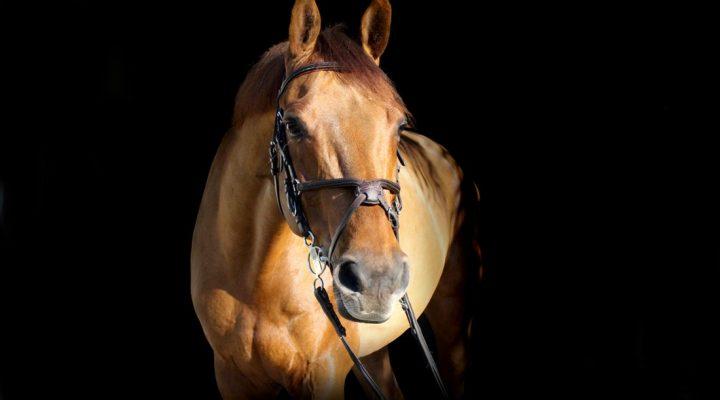 حقایقی در مورد اسب ها که نمیدانستید!